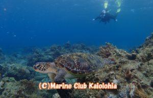 yakushima scuba diving