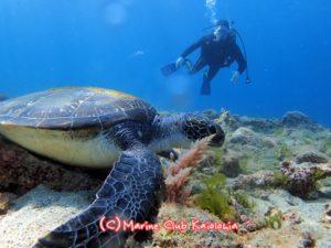 屋久島 ダイビング ウミガメ スキューバ
