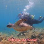 屋久島 ダイビング ウミガメ 体験ダイビング