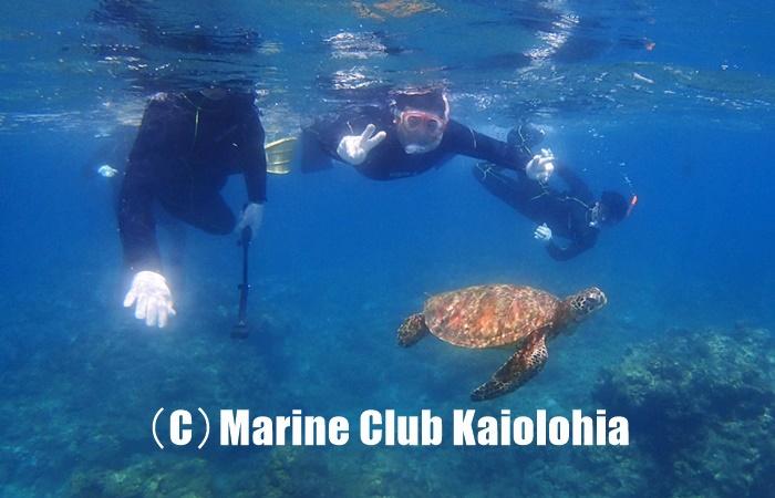 屋久島でウミガメとシュノーケリング