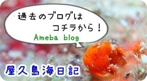 屋久島海日記