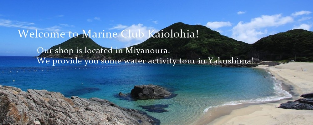 Welcome to marine club kaiolohia. Our shop is located in miyanoura. We provide you some water activity tour in yakusima.