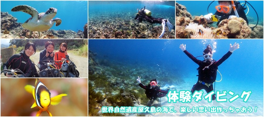 introductory scubadiving yakushima